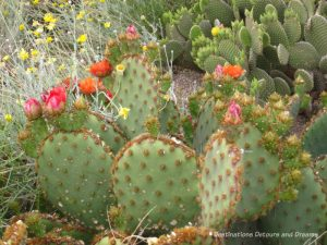 Arizona in Bloom: Blooms at Mesa's Park of the Canals