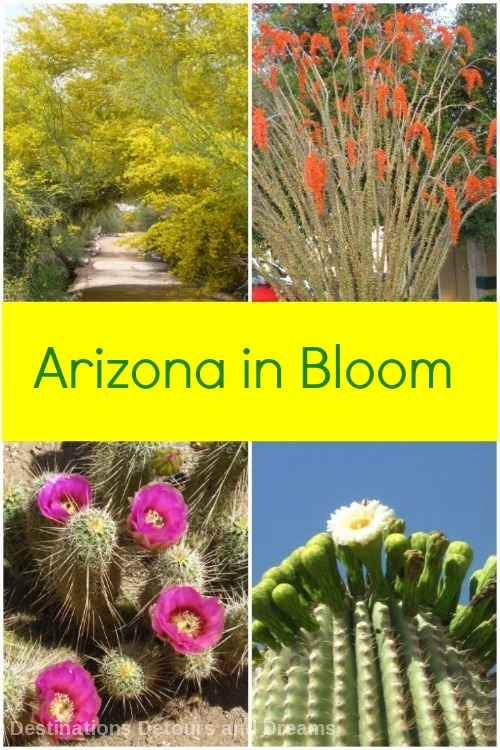 Assorted Arizona spring blooms