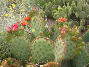 Blooms at Mesa's Park of the Canals