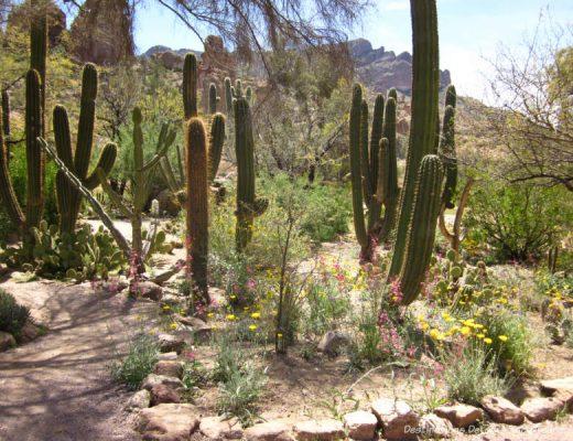 Boyce Thompson Arboretum in Superior, Arizona