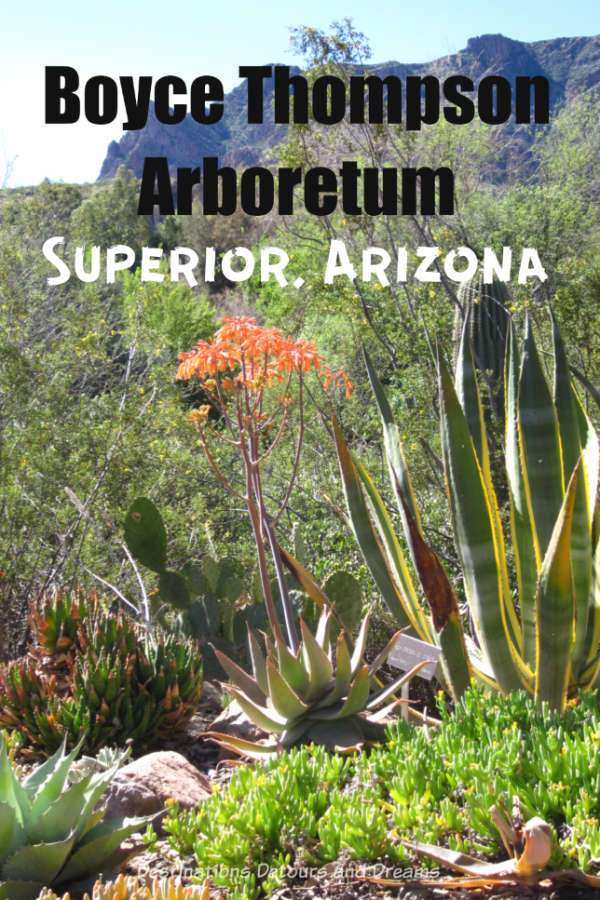 Appreciate the desert at Boyce Thompson Arboretum in Superior Arizona, a favourite place to see and learn about desert flora. #Arizona #Superior #garden #cacti #Sonorandesert #desert