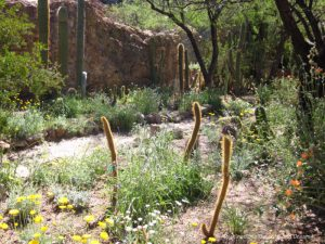 Boyce Thompson Arboretum in Superior Arizona