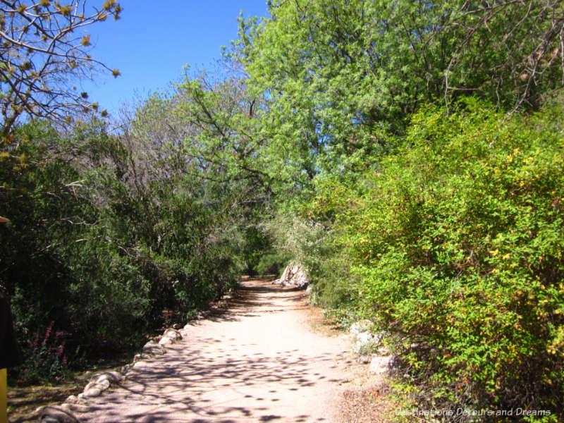Path at Boyce Thompson Arboretum