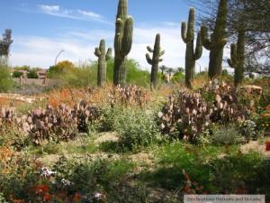 Gilbert Riparian Preserve cactus garden