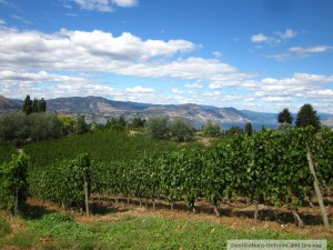 View from Therapy Vineyards in Naramata
