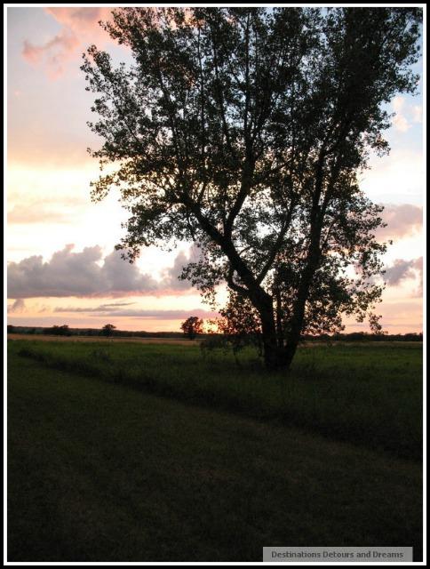 Farm near Miami, Manitoba