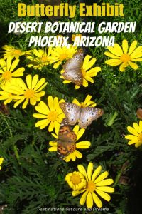 The Desert Botanical Garden in Phoenix, Arizona has a delight Butterfly Exhibit every spring and fall. #Phoenix #Arizona #garden #butterfly