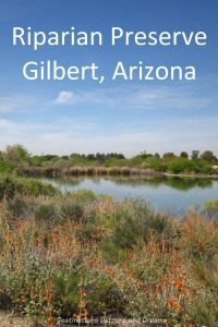 Riparian Preserve at Water Ranch in Gilbert, Arizona: Wetlands vegetation and wildlife in the midst of urban desert. #Arizona #Gilbert #riparian #park #fishing