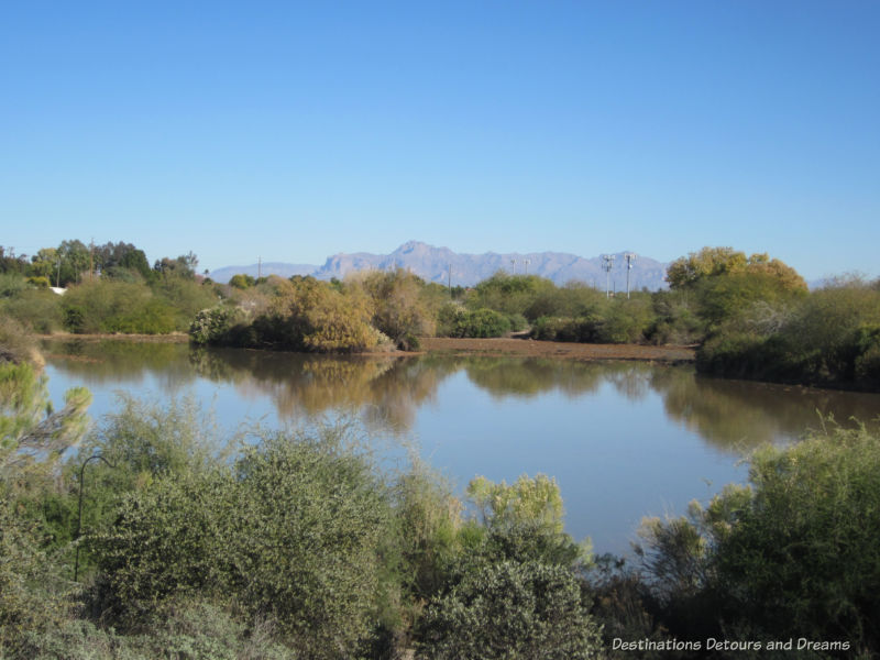 Riparian Preserve at Water Ranch in Gilbert, Arizona