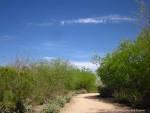 Walking trail at Water ranch Riparian Preserve in Gilbert, Arizona