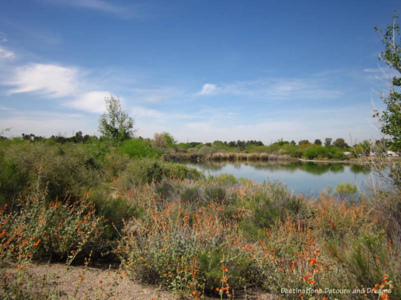 Water Ranch Riparian Preserve in Gilbert, Arizona