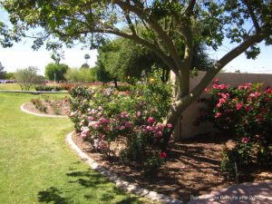 Mesa Community College Rose Garden flower beds