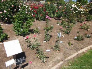 Test bed for the All-American Rose Selections program