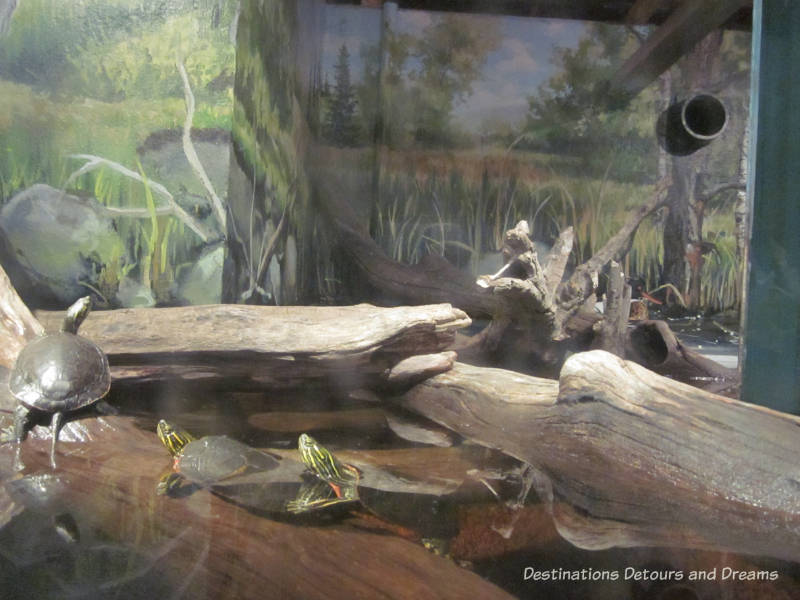 Aquarium at FortWhyte Alive: a 640-acre nature preserve in Winnipeg, Manitoba