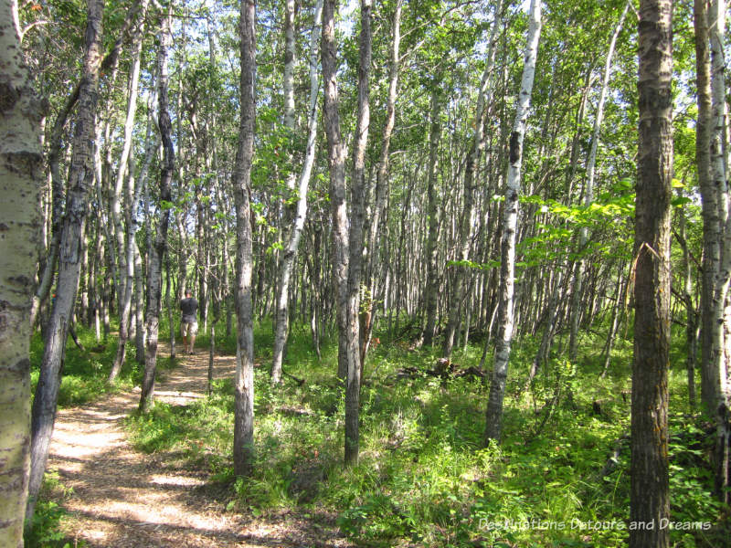 One of the paths at FortWhyte Alive: a 640-acre nature preserve in Winnipeg, Manitoba promoting awareness and understanding of the natural world through education, recreation and nature trails