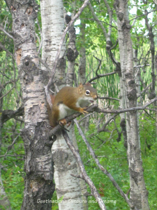 Squirrel at FortWhyte Alive: a 640-acre nature preserve in Winnipeg, Manitoba promotes awareness and understanding of the natural world through education, recreation and nature trails