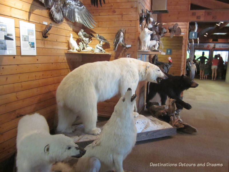 Touch Me Museum at FortWhyte Alive: a 640-acre nature preserve in Winnipeg, Manitoba