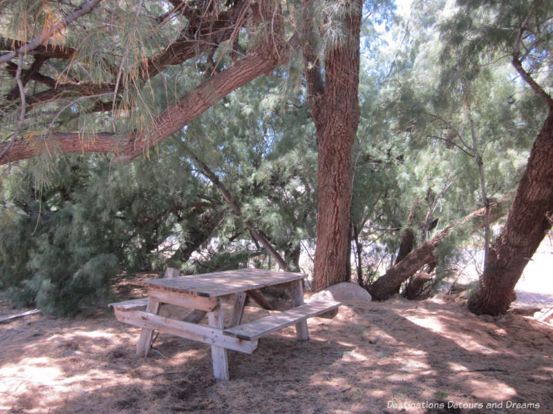 Picnic table in the shade at edge of the property at the World's Smallest Museum