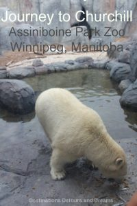 Journey to Churchill exhibit at Assiniboine Park Zoo in Winnipeg Manitoba: polar bears and more