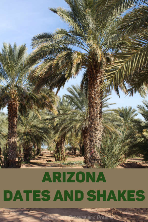 Visiting date farms and sampling date shakes in the Yuma Arizona area #Arizona #Yuma #dates