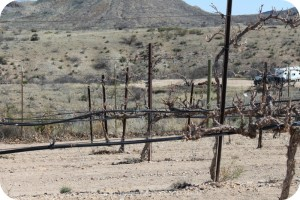 Arizona pruned grapes