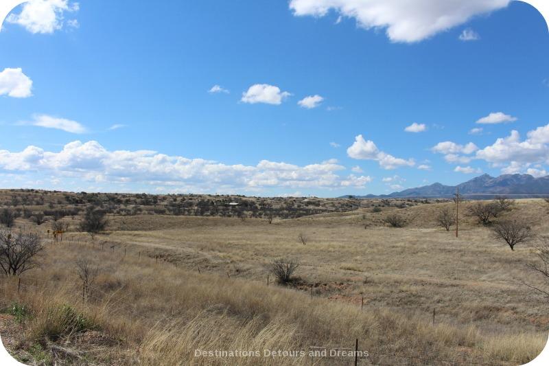 Arizona grassland