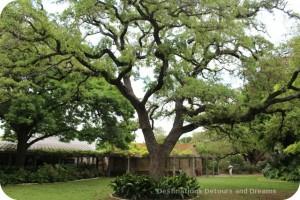 Alamo hero commemorative tree