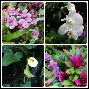 Blooms from San Antonio Botanical Garden