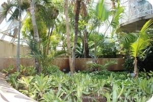 San Antonio Botanical Garden Palm and Cycad Pavilion