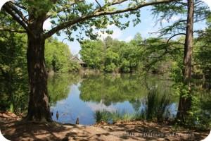 San Antonio Botanical Gardens East Texas Pineywoods