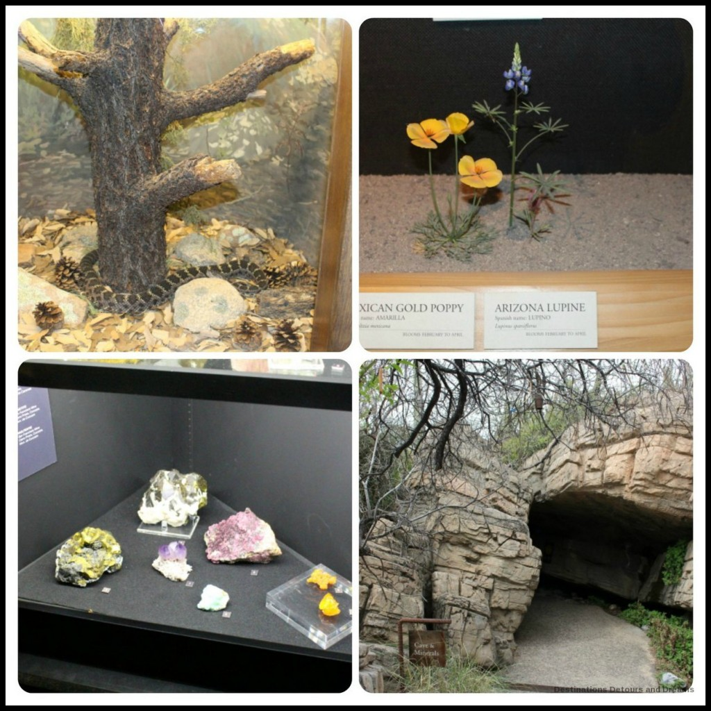 Arizona-Sonoran desert Museum exhibit sample