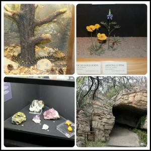Arizona-Sonoran desert Museum exhibit sample