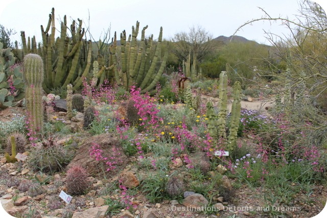 Arizona Sonoran Desert Museum