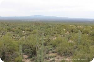 Arizona-Sonoran Museum Desert Loop trail