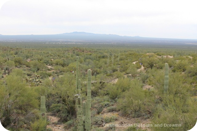 Arizona-Sonoran Museum Desert Loop trail