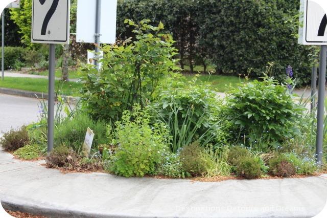 Vancouver Green Street traffic circle garden