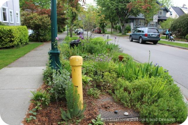 Vancouver Green Streets garden