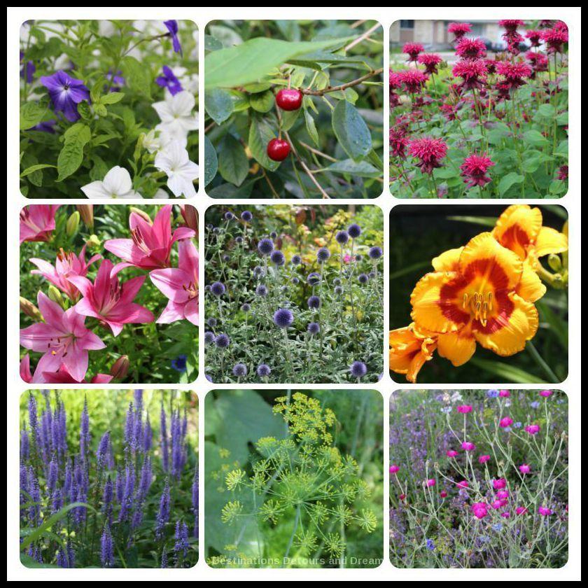 reasons-garden-tour-flowers