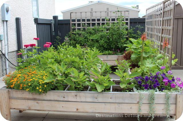 Raise square foot garden beds