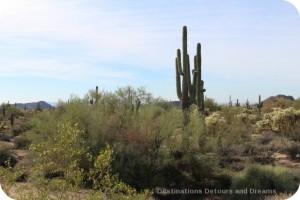 Desert Plant Walk at Usery Mountain Park