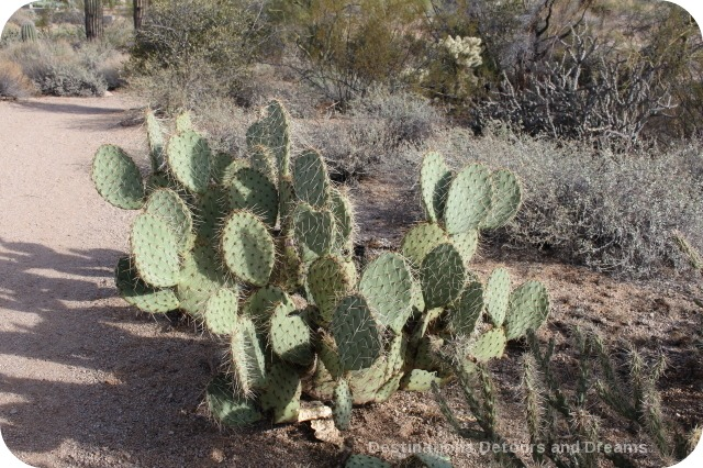 Cacti in Usery Mountain Park
