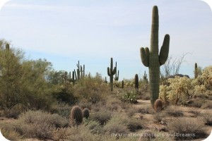 Desert Plant Walk at Usery Mountain Park