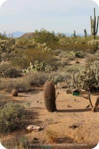Desert Plant Walk in Usery Mountain Park