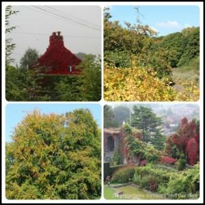 Autumn foliage inWales
