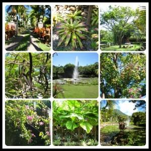 Botanical Garden of Nevis