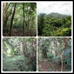 Nevis mountain trails