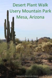 Desert Plant Walk at Usery Mountain Park,Mesa Arizona #Arizona #desert #park #Mesa #hike