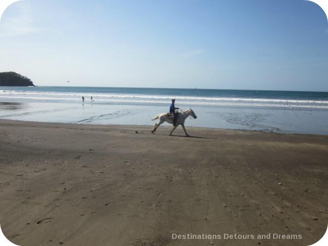 Horse on beach Panama