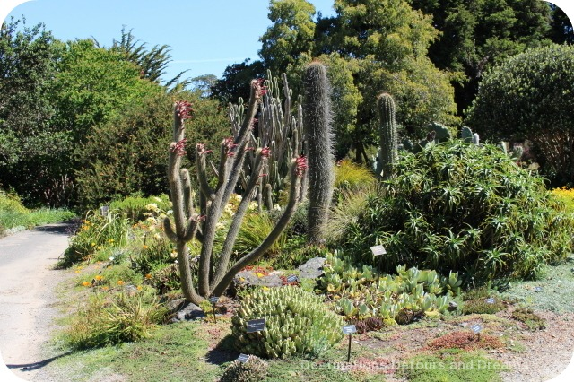 Mendocino Coast Botanical Garden Desert Garden