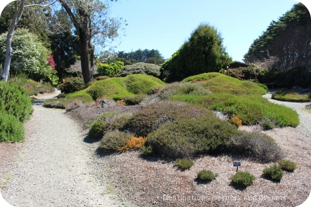 Rhododendrons at mendocino coast botanical gardens - Mendocino coast botanical gardens ...